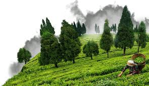 Assam Top Best 25 Tourist Places in India (1)